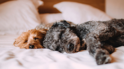 Sleep:  Moving Beyond Sleep Hygiene